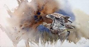 2020 - World Curlew Day - Kitty Harvill (1)