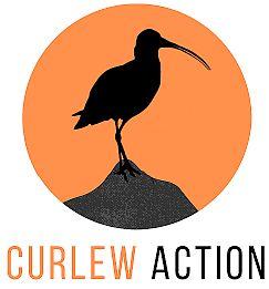 CA Logo C