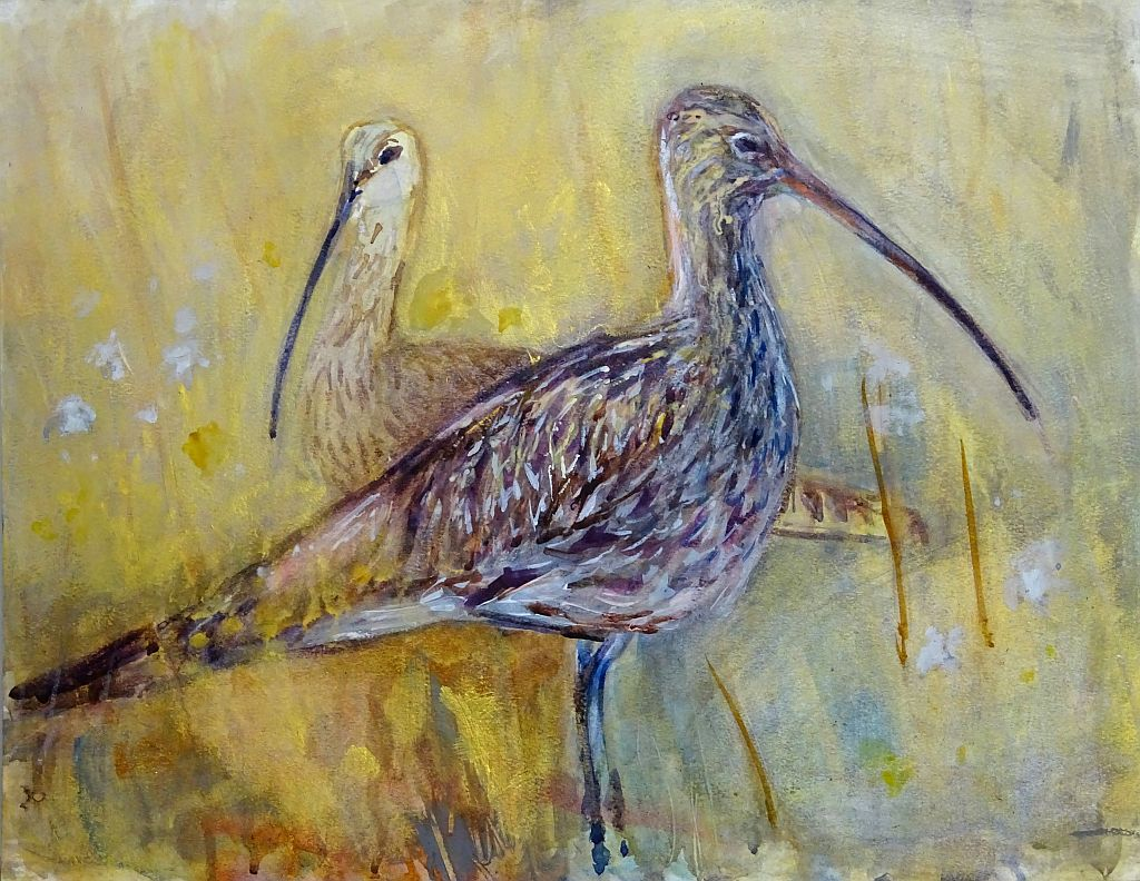 Curlew Symmetry Mark Gibbs resized