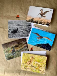 Curlew cards