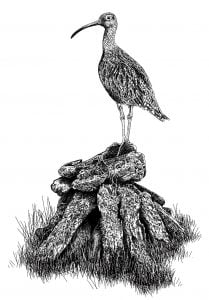 Curlew_Moon_Chapter_5_-_Curlew_Landed_On_A_Peat_Stack