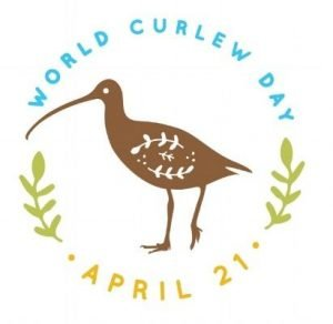 World Curlew Day logo, designed by Nicola Duffy