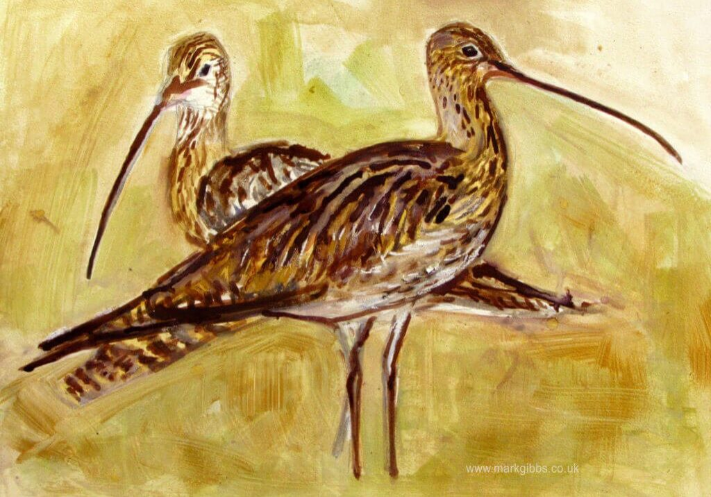 Curlew pair peat sketch. Mark Gibbs sendout Geltsdale peat, ink watercolour and acrylic gold copy
